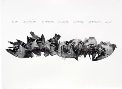 Sandra Haar, untitled (pigeon), from the Crown series